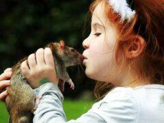 Симптоматика мышиной лихорадки у детей
